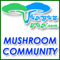 fungus fun mushrooms