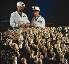 medical mushrooms